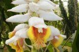 24-016-Rio-Botanischer-Garten