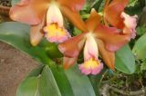 24-018-Rio-Botanischer-Garten