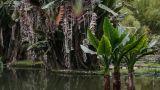 24-008-Rio-Botanischer-Garten